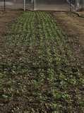 photos of Six Row Seeder