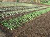Seeders Agriculture pictures