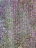 Seeders Berkshire pictures
