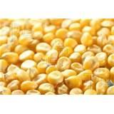 Seeds Corn images