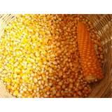 images of Seeds Corn