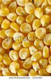 photos of Seeds Corn