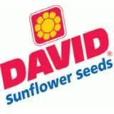 Seeders David pictures