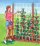 photos of Seeders For The Garden