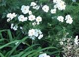 Seeders For The Garden photos