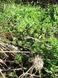 Seeders Llp images