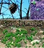 photos of Seeders Many