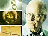 images of Seeds Manufacturer