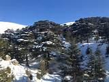 Cedars Of Lebanon photos