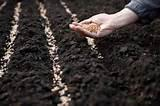 Seeds Sowing pictures