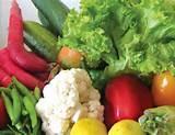 Seeds Vegetable Crops