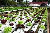 Seeders Vegetable Gardens photos